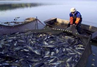 أساسيات تغذية أسماك المزارع السمكية D-aquaculture-une-production-de-130-tonnes-de-poissons-en-2015-au-barrage-de-djorf-ettorba-05914